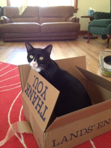 He was so grateful that he sat in his Thank You box for a week straight.