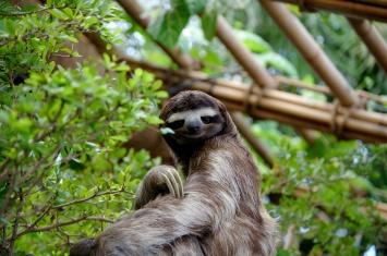 SlothDWA.jpg